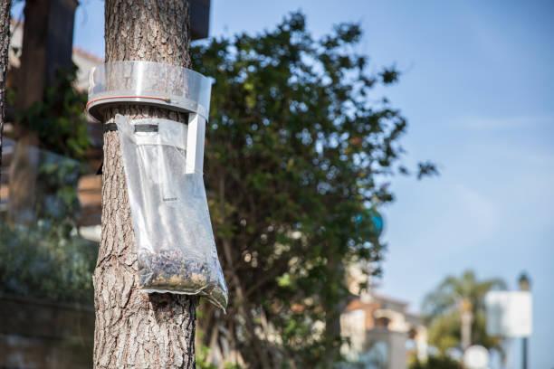 caterpillar falle installiert auf einem baum zu gewinnen fangen insekten - mottenfalle stock-fotos und bilder