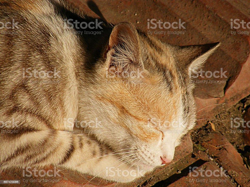 images de belle chatte lesbiennes lucking chatte
