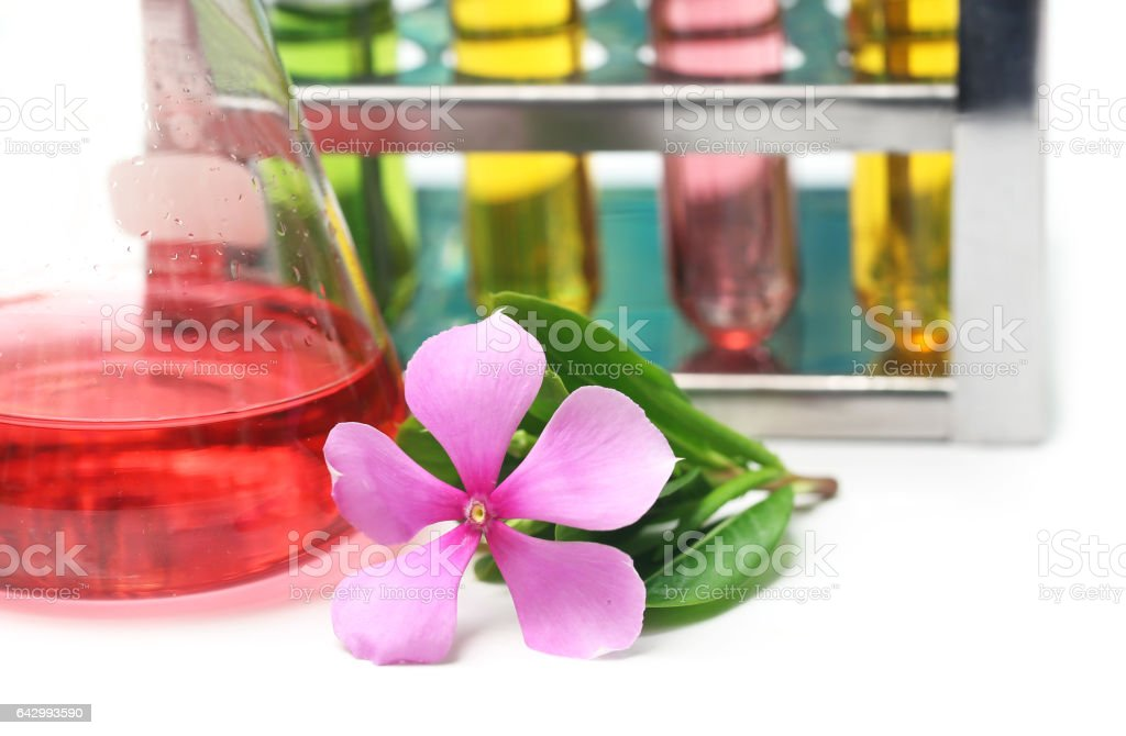 Catharanthus roseus in analytical laboratory stock photo