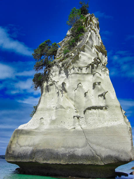 Cathedral Cove, Coromandel Peninsula, North Island, New Zealand the Cathedral Cove, Coromandel Peninsula, North Island, New Zealand tufted gray langur stock pictures, royalty-free photos & images