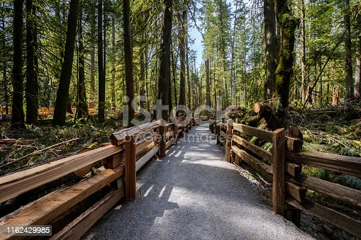 Pathway through the famous old growth forest of Cathedral Grove on Vancouver Island.