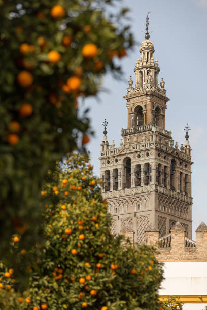 Cathedral of Seville and orange tree, La Giralda, Andalusia, Spain Cathedral of Seville and orange tree, La Giralda, Andalusia, Spain santa cruz seville stock pictures, royalty-free photos & images