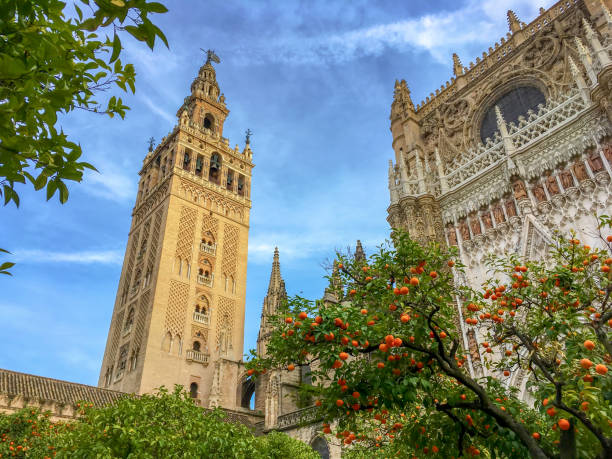 Cathedral of Seville and the Giralda, Andalusia, Spain Cathedral of Seville and the Giralda, Andalusia, Spain seville stock pictures, royalty-free photos & images
