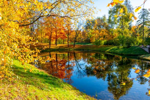 catherine park in autumn, tsarskoe selo (pushkin), saint petersburg, russia - пруд стоковые фото и изображения