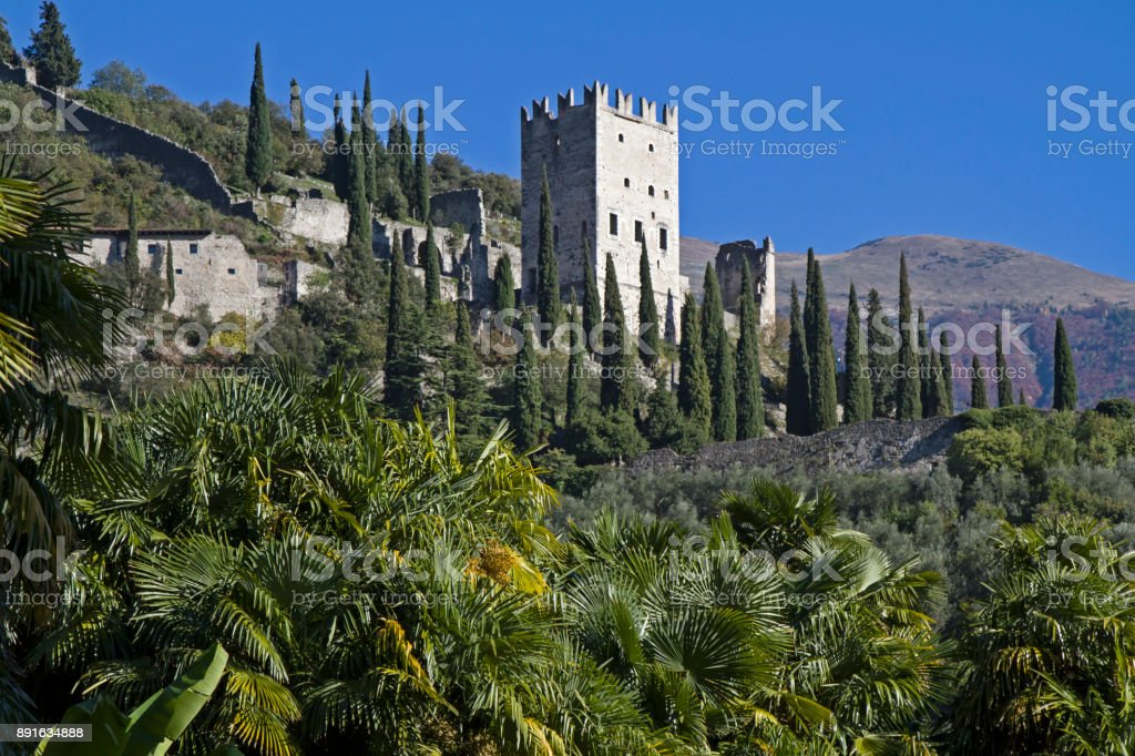 catle in Arco stock photo