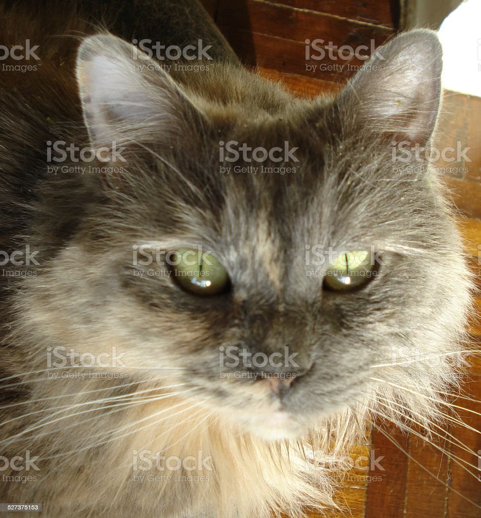 Catnip Kitty stock photo