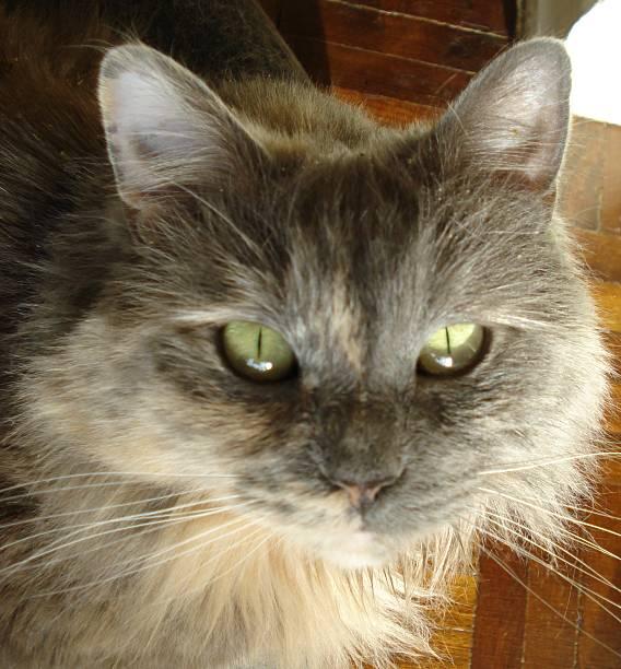 Catnip Kitty stock photo