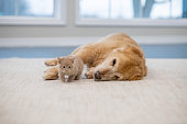 istock Cats and dogs do get along! 1293495230