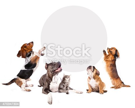 istock cats and dogs holding a cork banner 470347304