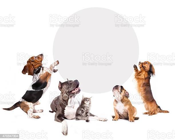 Cats and dogs holding a cork banner picture id470347304?b=1&k=6&m=470347304&s=612x612&h=qqhxa cnarbjrb7hrfxnhtmrncxsr6p1nq4zft9vlz0=