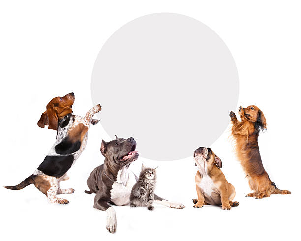 Cats and dogs holding a cork banner picture id470347304?b=1&k=6&m=470347304&s=612x612&w=0&h=e2zzhoxy7fbman0ol5uvylqzhiekg78scargw7wb6 m=