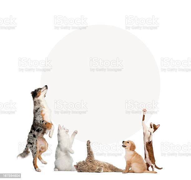 Cats and dogs in front of a blank sign picture id167594604?b=1&k=6&m=167594604&s=612x612&h=b1nwbbdyknd5aoxhpbycwsby4micsew 3nbvfuxy6g0=