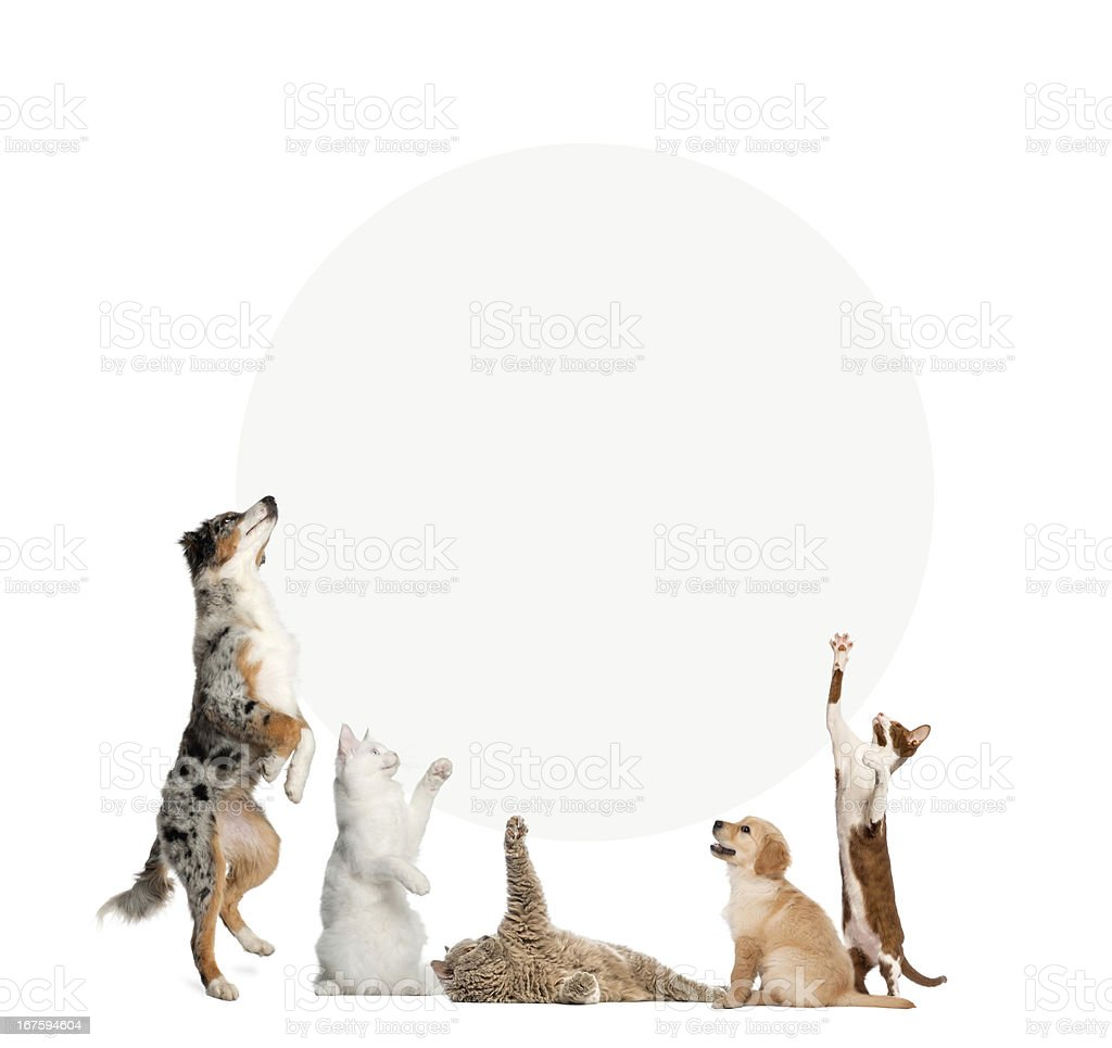 Cats and dogs in front of a blank sign stock photo