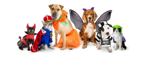 Cats and Dogs in Halloween Costumes Web Banner Row of dogs and cats together wearing cute Halloween costumes. Web banner or social media header on white. costume stock pictures, royalty-free photos & images