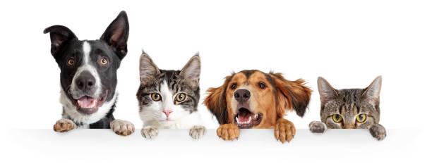 gatos y perros peeking over white web banner - mascota fotografías e imágenes de stock