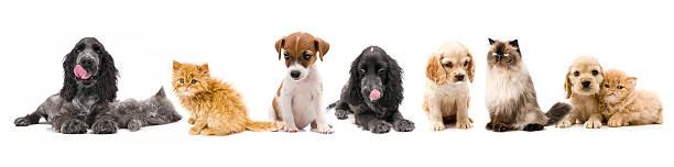 Cats and dogs picture id157484682?b=1&k=6&m=157484682&s=612x612&w=0&h=c3zdsrvlj4sgtj0ezjmjdlaf7qljpdqm8o5ozuegwvk=