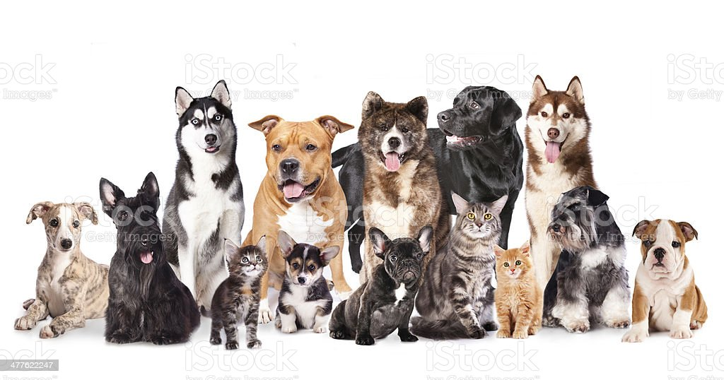 cats and dogs stock photo