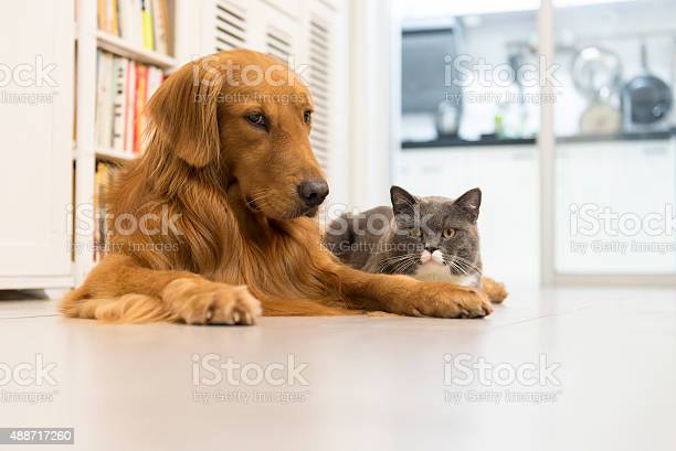 Cats and dogs picture id488717260?b=1&k=6&m=488717260&s=612x612&h=qe xu6bnwalun22ahpho hi7uwjf5cof6t06bbzalog=