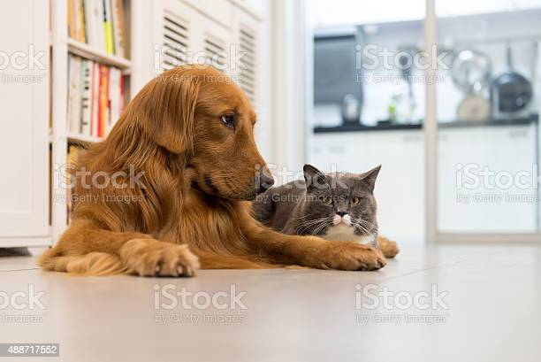 Cats and dogs picture id488717552?b=1&k=6&m=488717552&s=612x612&h=hvmbcjpekjx31hg1vriw p1ajwnhi6iooxcsmza7ie0=