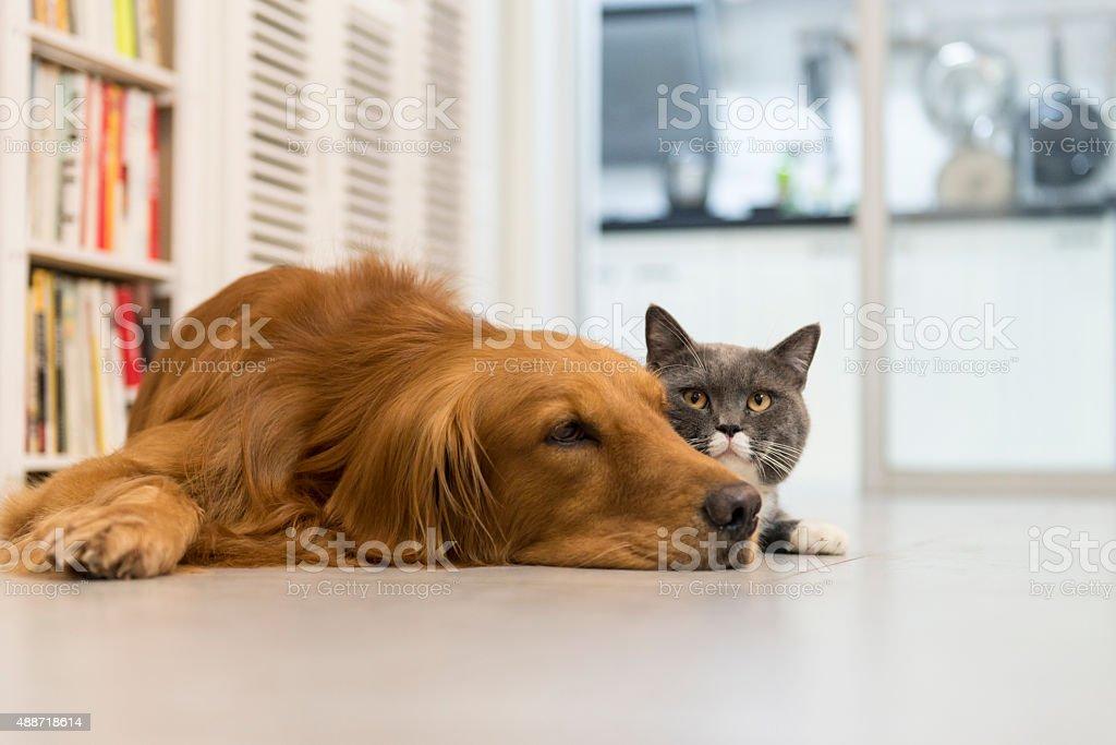 Cães e gatos foto royalty-free