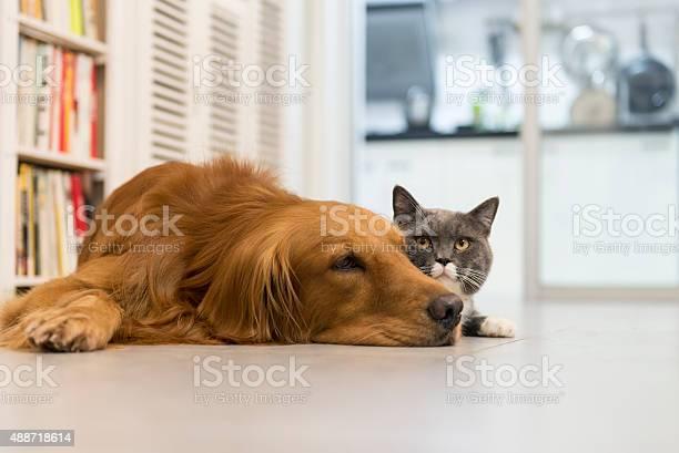 Cats and dogs picture id488718614?b=1&k=6&m=488718614&s=612x612&h=gevej4pfg3l6sfv82wue7u2wkur6yvbaesl3wjh1txg=