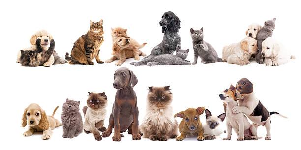 Cats and dogs picture id512387803?b=1&k=6&m=512387803&s=612x612&w=0&h=izz0ovwlejms9amhmhosp9vd8ujhactcn5vnikc2pqq=