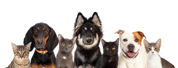 Cats and Dogs Together White Web Banner stock photo