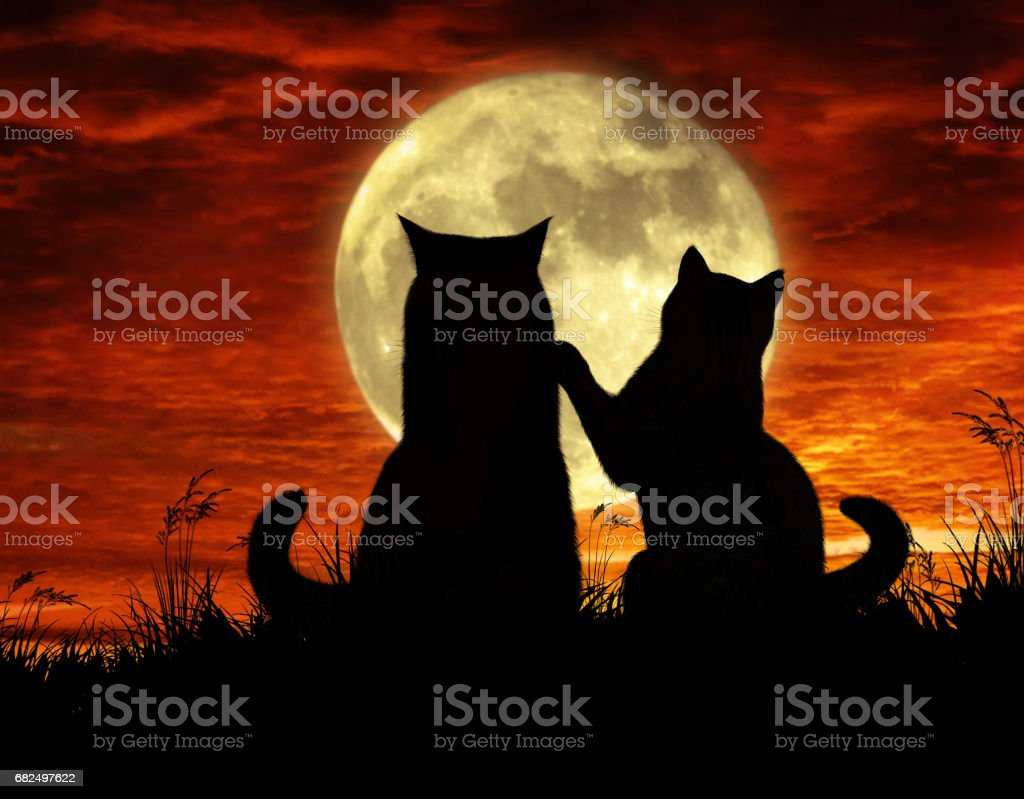 Cats and moonlight foto de stock libre de derechos