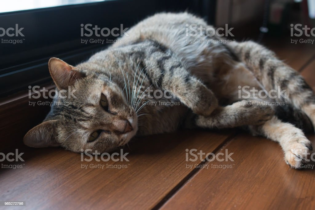 Cats are sleeping royalty-free stock photo