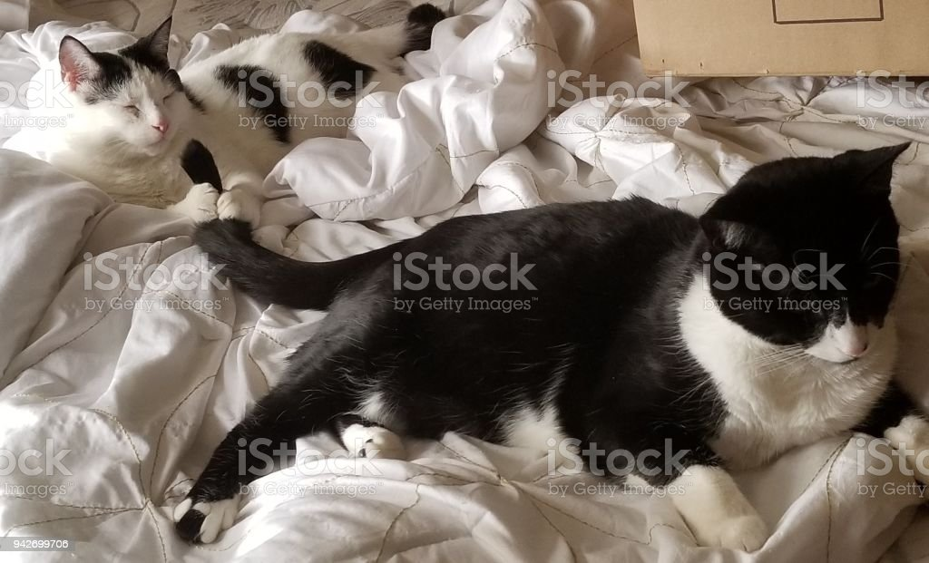 Cats being cats stock photo