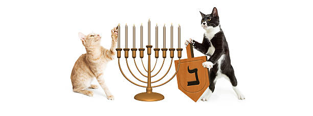 Cats celebrating hanukkah picture id626685676?b=1&k=6&m=626685676&s=612x612&w=0&h=ofxorqeejbofze0b9n3rihqhfxhsvbte5ec0fq2fdvk=