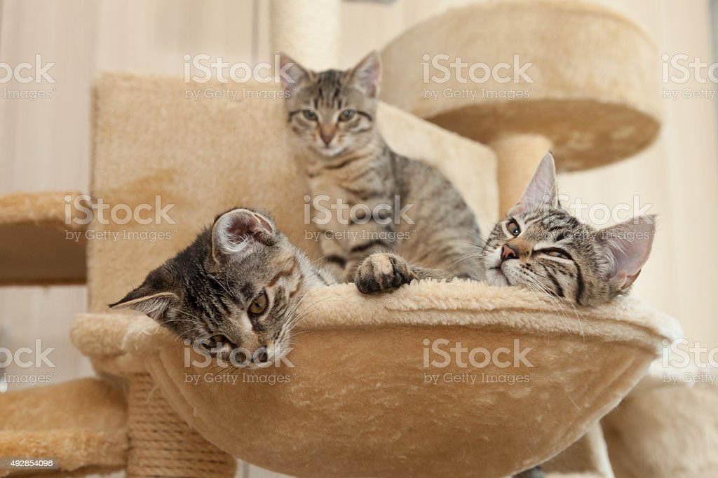 cats cozy place stock photo