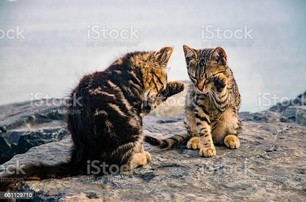 Cats cute kittens on the beach rocks picture id601129710?b=1&k=6&m=601129710&s=612x612&h=gxrxdxlknsubkgjqvsq yxntqlx8t9xgvsjchinew q=