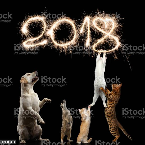 Cats dog and meerkat preparing for the new 2018 year picture id875884818?b=1&k=6&m=875884818&s=612x612&h=bf 9abel4tgmd2qzgitn5f3a0qhq9uavvmghffgdgio=