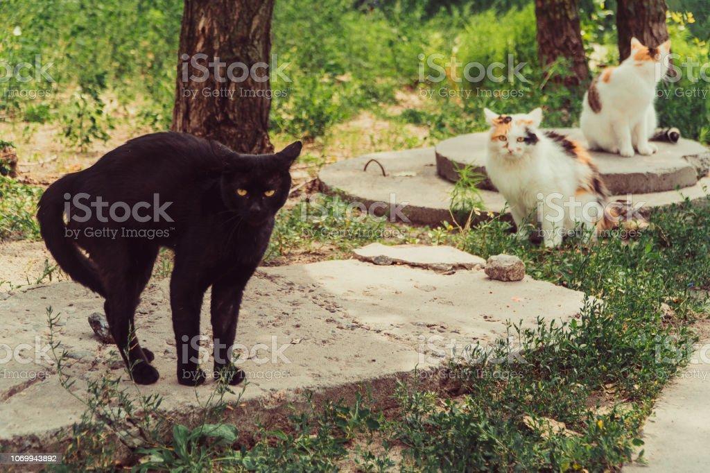 Cats. Domestic Cats