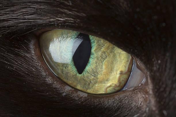 Cats eye closeup picture id506124700?b=1&k=6&m=506124700&s=612x612&w=0&h=nr xxu4mqtssado5mzf4qyq jbpd1nmqxn2rr   7qc=