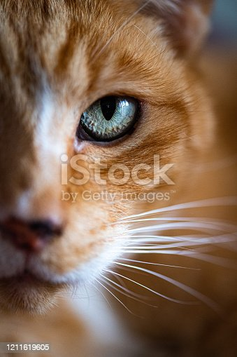 Detailed cats eye