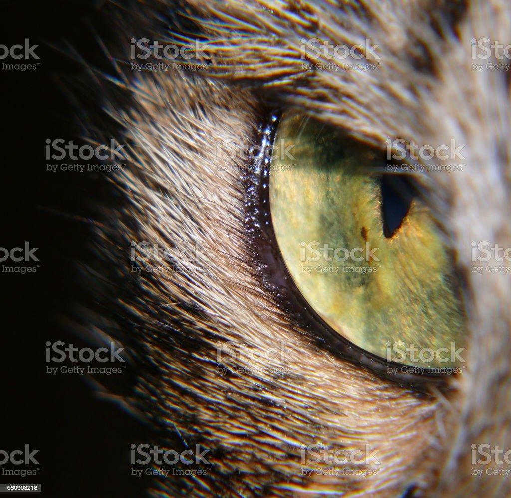 Cat's Eye royalty-free stock photo