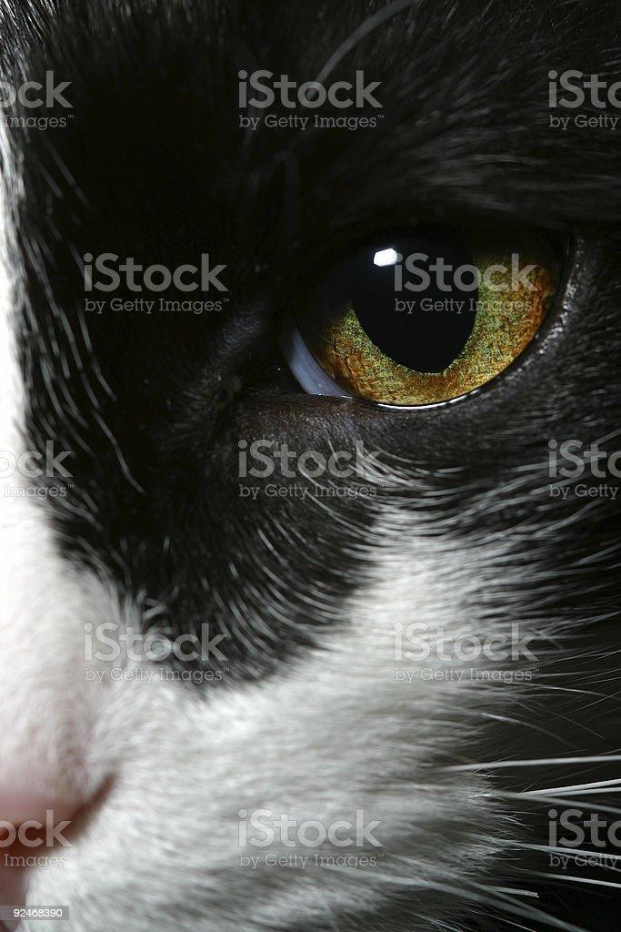 Cat's Eye stock photo