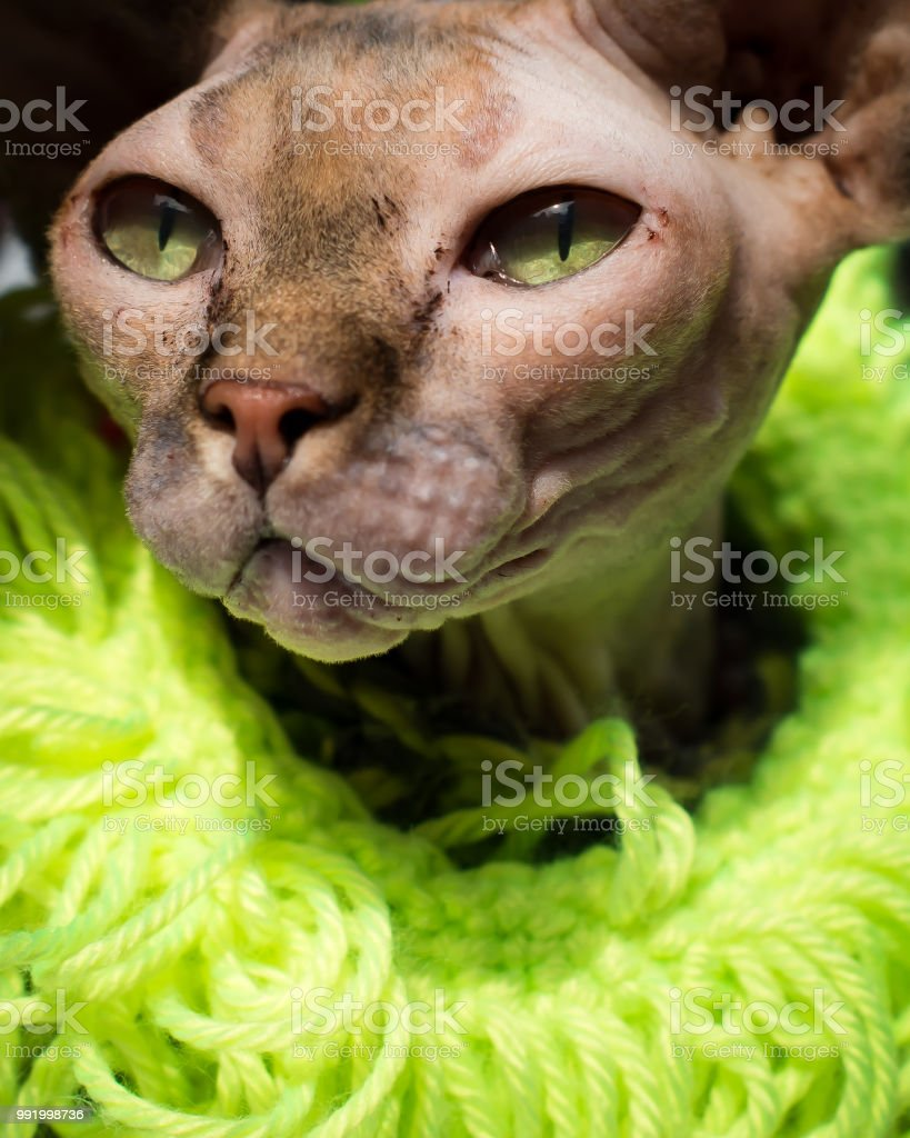Cat's Eyes of Color stock photo