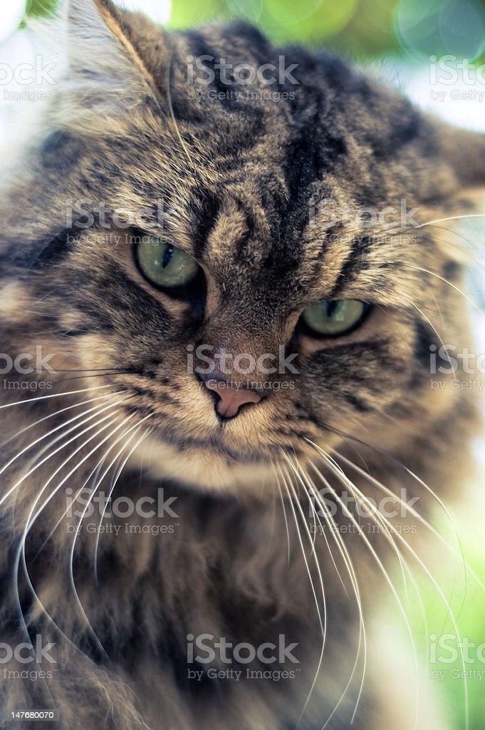 Cat's Eyes stock photo