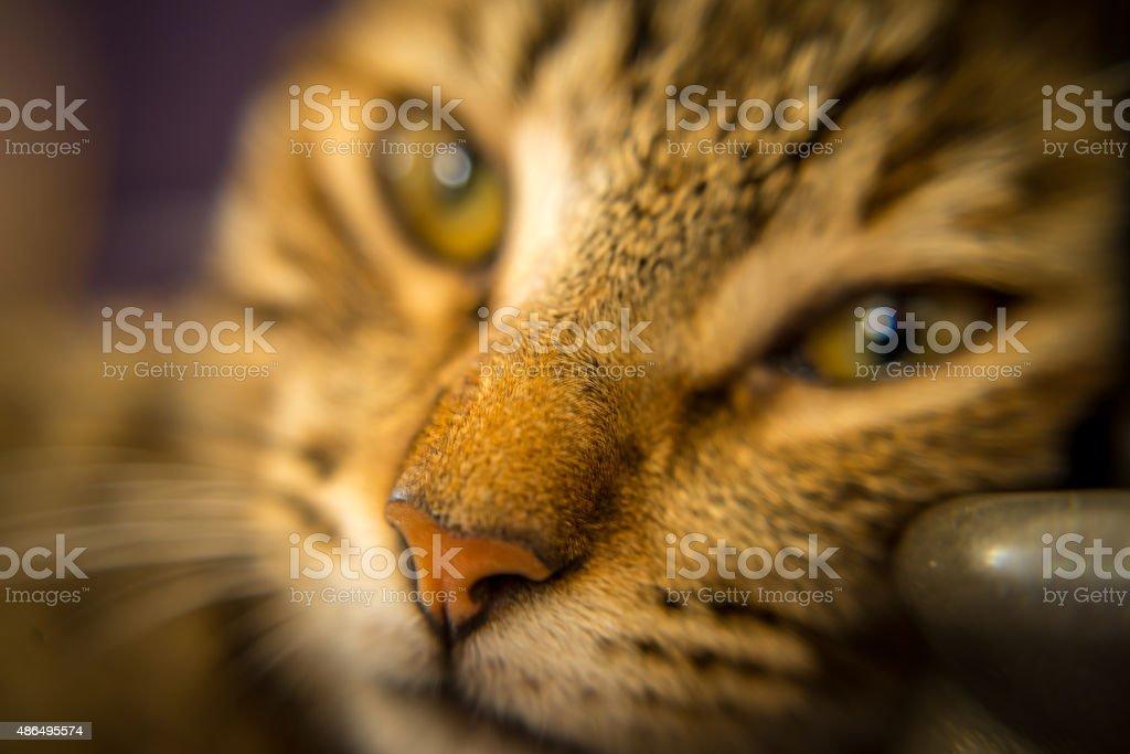 Katzen Augen – Foto
