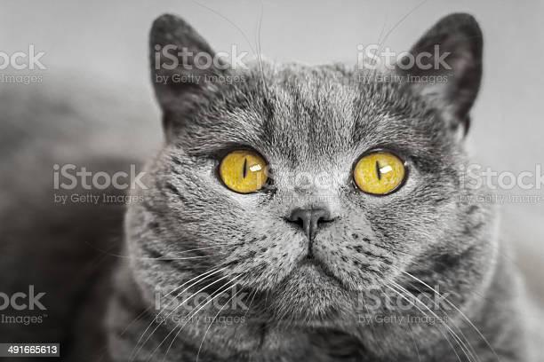 Cats eyes picture id491665613?b=1&k=6&m=491665613&s=612x612&h=9jfc5qq3nj1jqarl3zb14m0x56n4no8r8acvbcvmk6g=