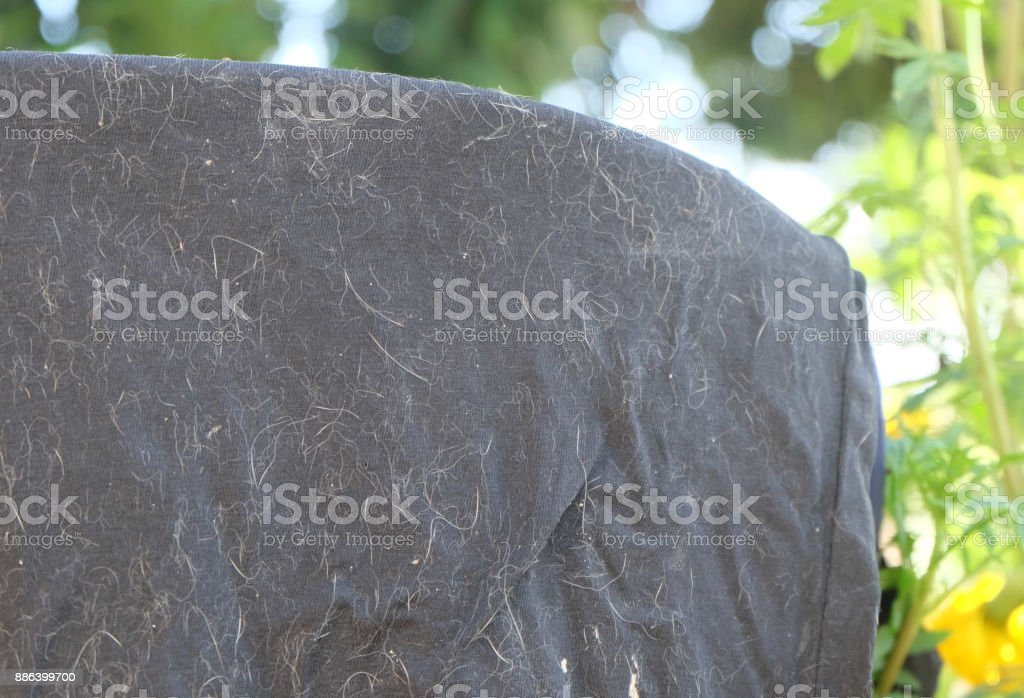 Cats fall to the black fabric. stock photo