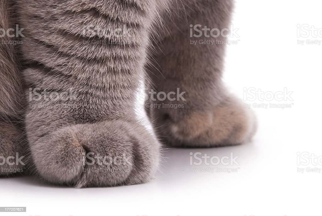 Cat's feet. Gray color. stock photo