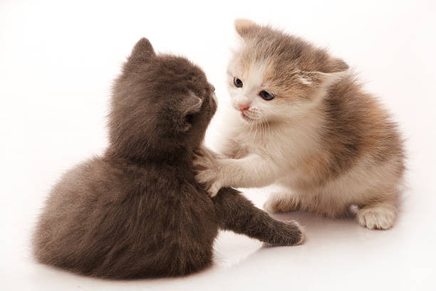 Katzen Kampf – Foto