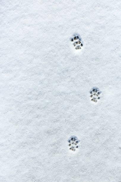 Cats footprint in the snow picture id537790193?b=1&k=6&m=537790193&s=612x612&w=0&h=vdprjv hd9nnl3ujsh14cpfpfsnotfykv5q8unbgljw=