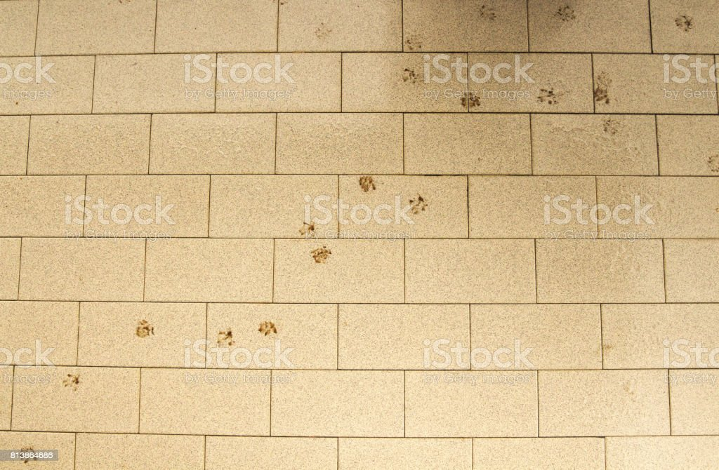 Cat´s Footprints on Balcony stock photo