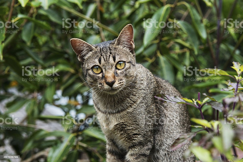 Cats glance royalty-free stock photo