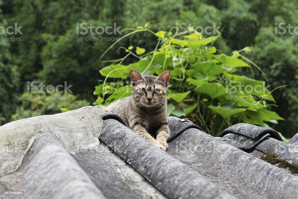 Cats glance royalty-free stock photo